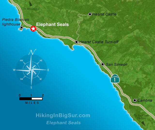 Elephant Seals Big Sur Hiking in Big Sur Elephant